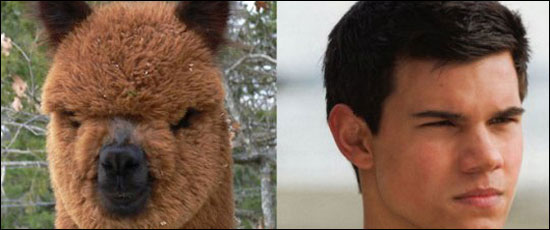 taylor lautner looks like an alpaca that cant act